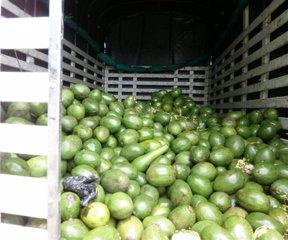 Productores de México buscan invertir en el país.